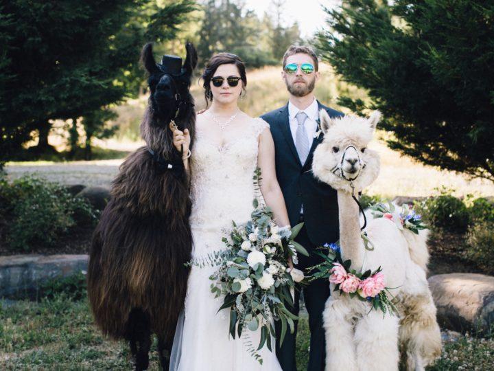 JT + Ashley – No Probllama Wedding